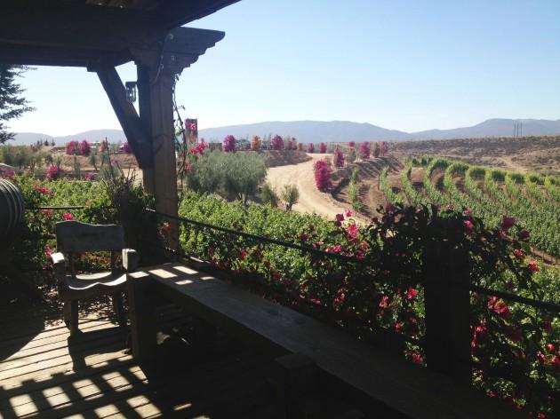 Viñas de Garza - bajatheothercalifornia.com